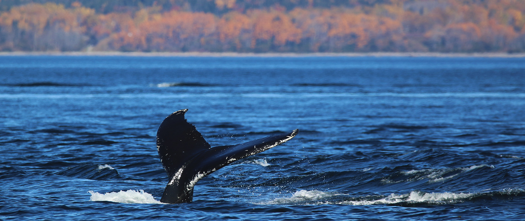 Whale escapades, alpaca tours, and more in Quebec's Charlevoix region