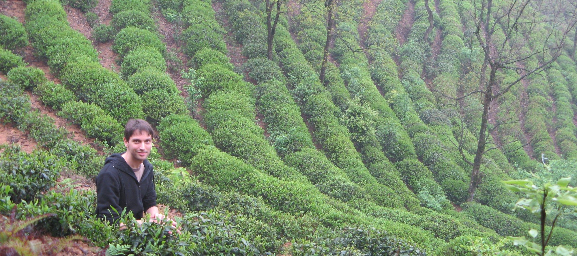 WORLD OF TEA: Daniel Tremblay of CHA YI Teahouse travelled to China and Taiwan in search of the latest and greatest