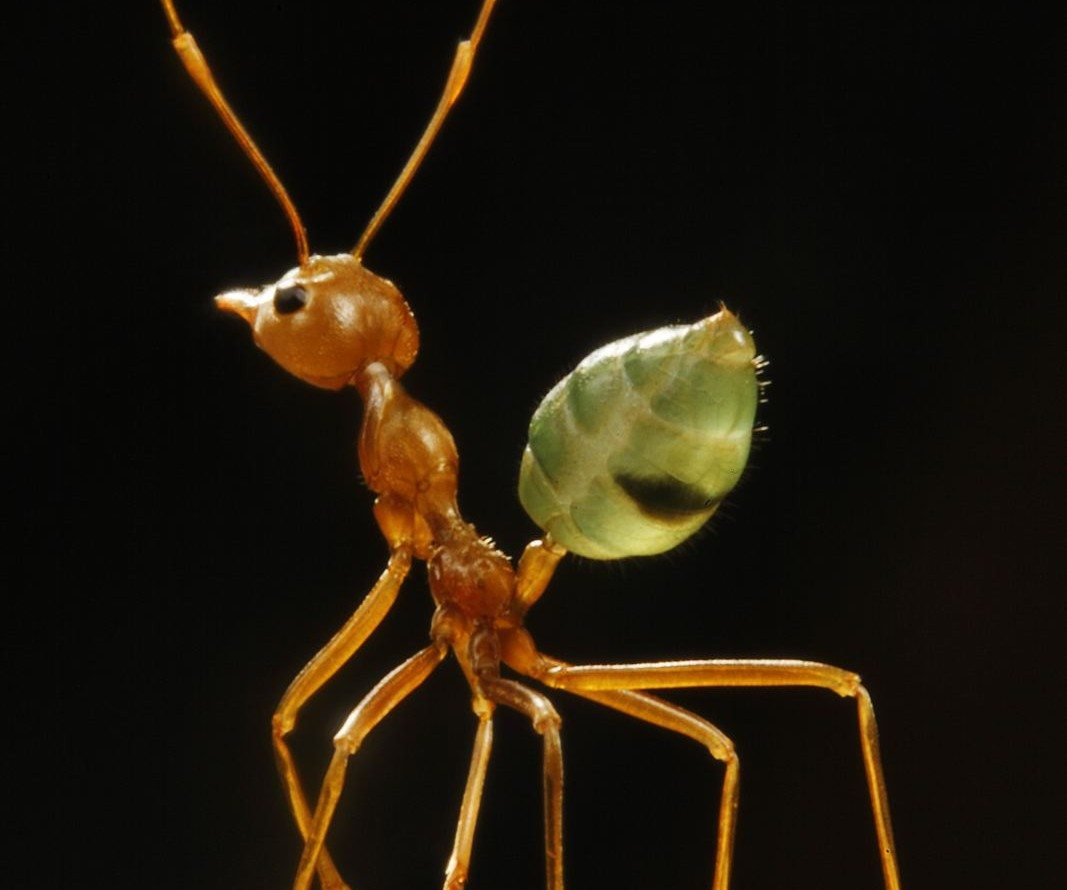 ARTFUL BLOGGER: Museum of Nature summons a pest exterminator for ant exhibition