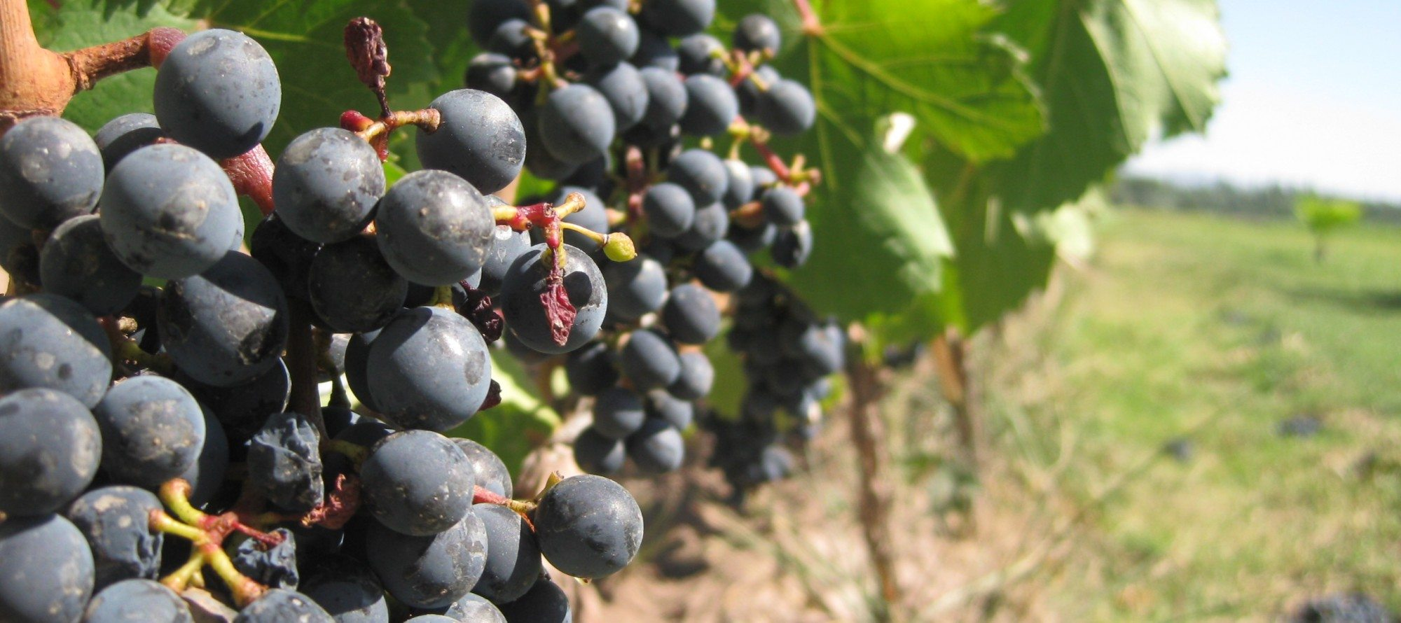 TASTING NOTES: Celebrate World Malbec Day with four fine wines