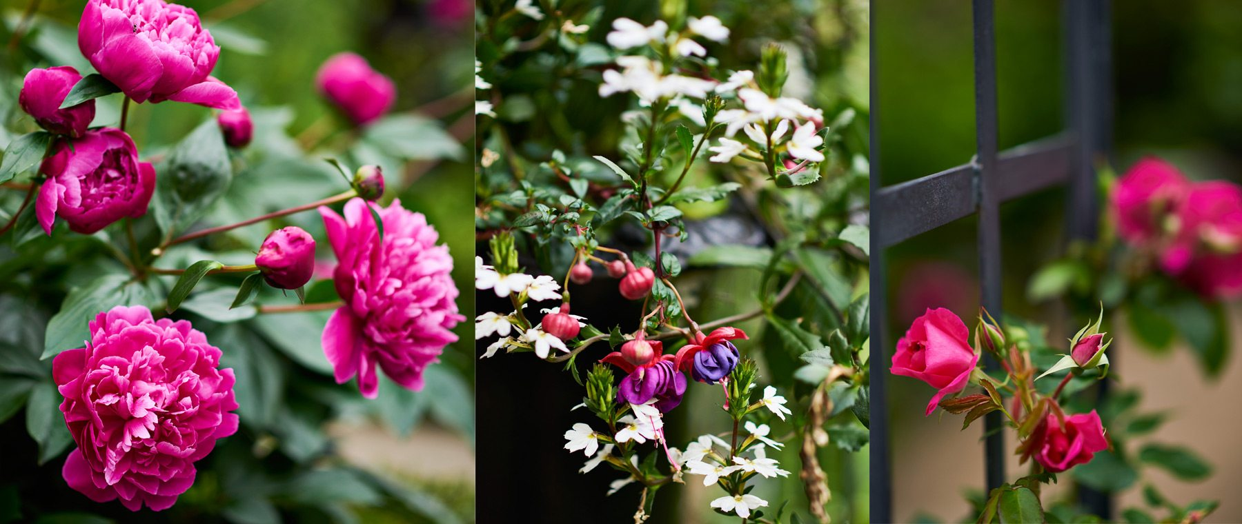 The garden is now known for its spring palette of pinks, whites, and purples.