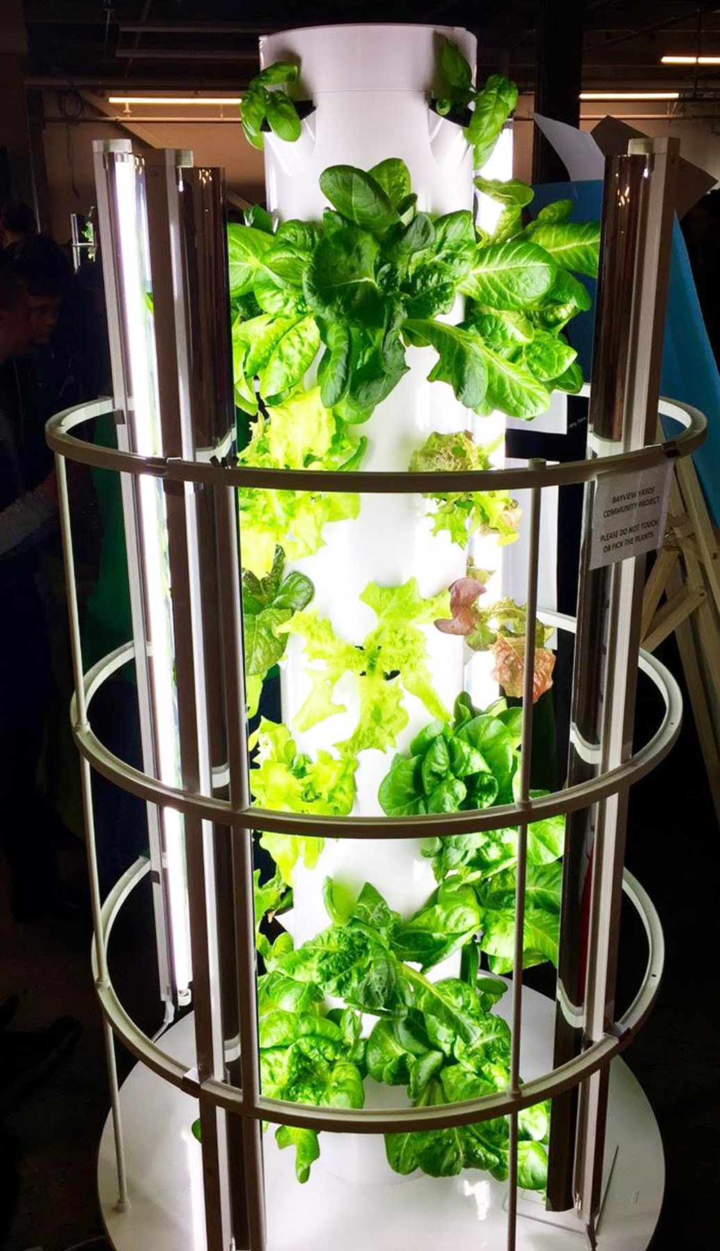 Replacing the water cooler — the Garden Tower, a vertical hydroponic, vegetable-growing structure
