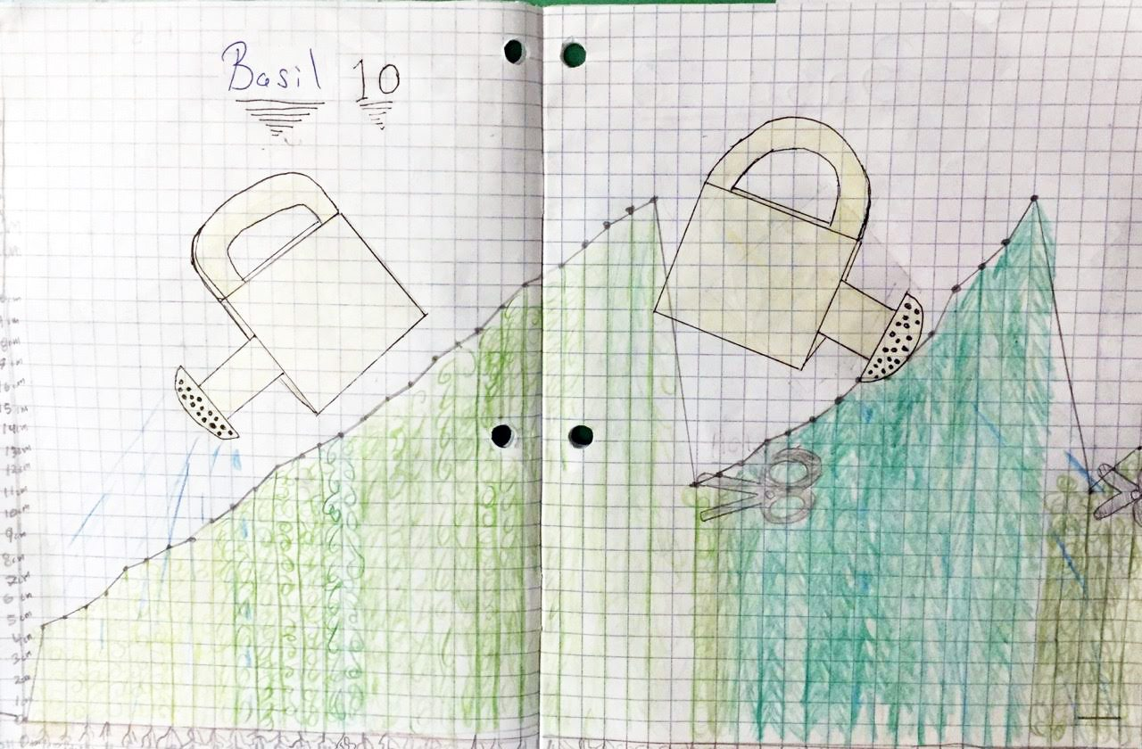 Charts and graphs for growing basil! An example of the how the kids are involved in the project