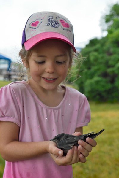 Huszcz encourages visitors to hold the purple martin nestlings while they wait for banding. Photo: Tony Beck