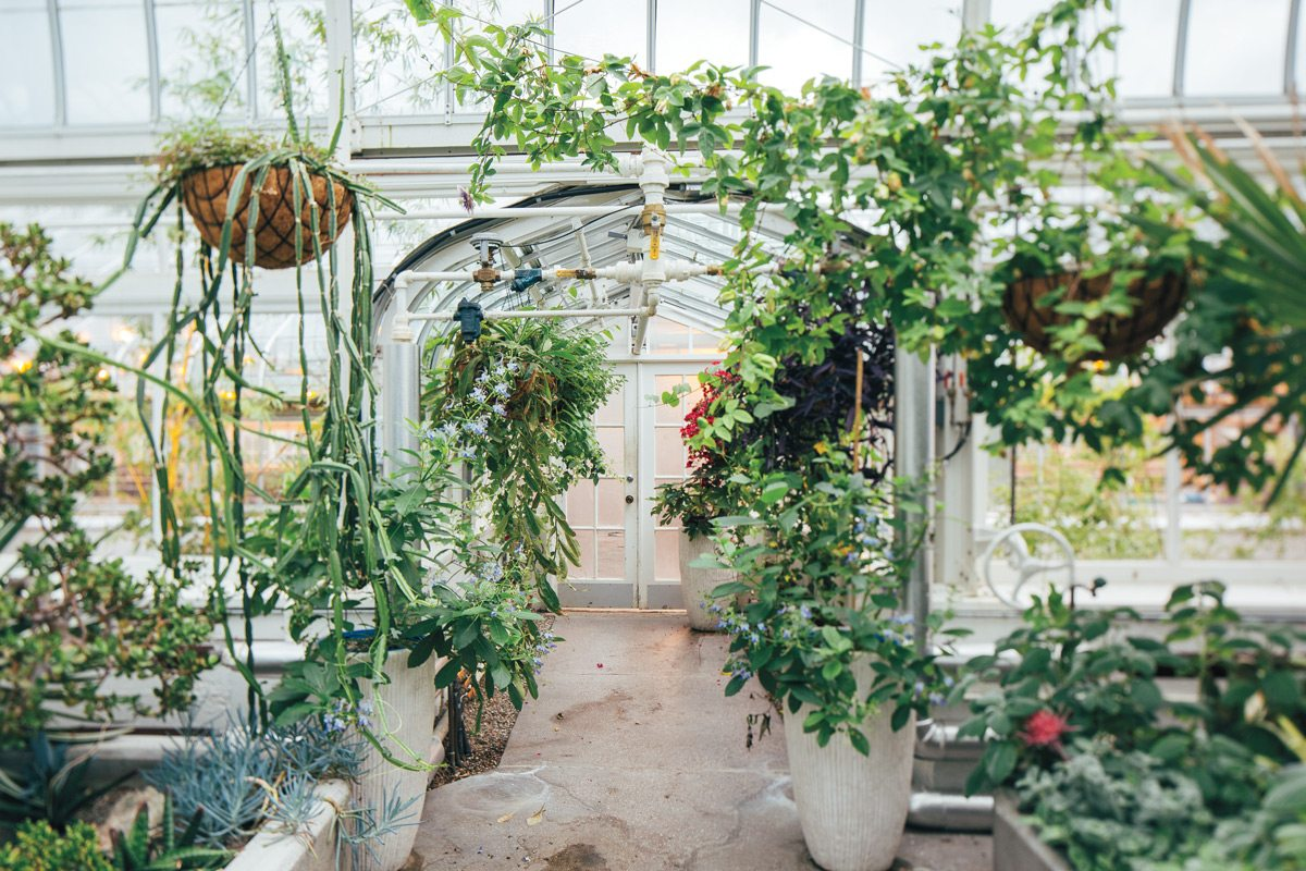 The beauty of the conservatory at the Experimental Farm is as much about the building as its contents, with a curvy metal-and-glass design that is both sophisticated and delicate. Photography: Brendan Burden