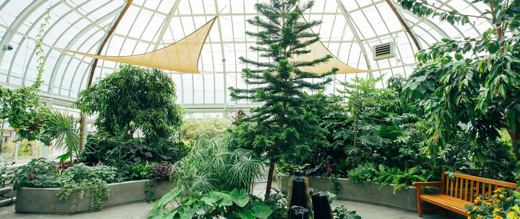 Need a tropical getaway? Soak up the sun inside a century-old conservatory