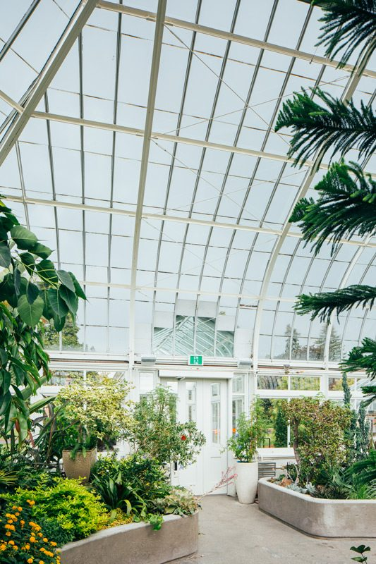 Just a thin layer of glass separates the visitor from the snowy winterscape, and yet the conservatory is a temperate world apart. At night, the elegant canopy glows green as the light filters through the foliage. Photography: Brendan Burden