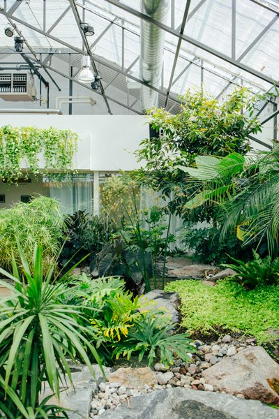 A curtain of greenery flows down over the entrance to the staff offices located at the back of the café. The café and its sister greenhouse have become a popular destination for weddings and large meetings