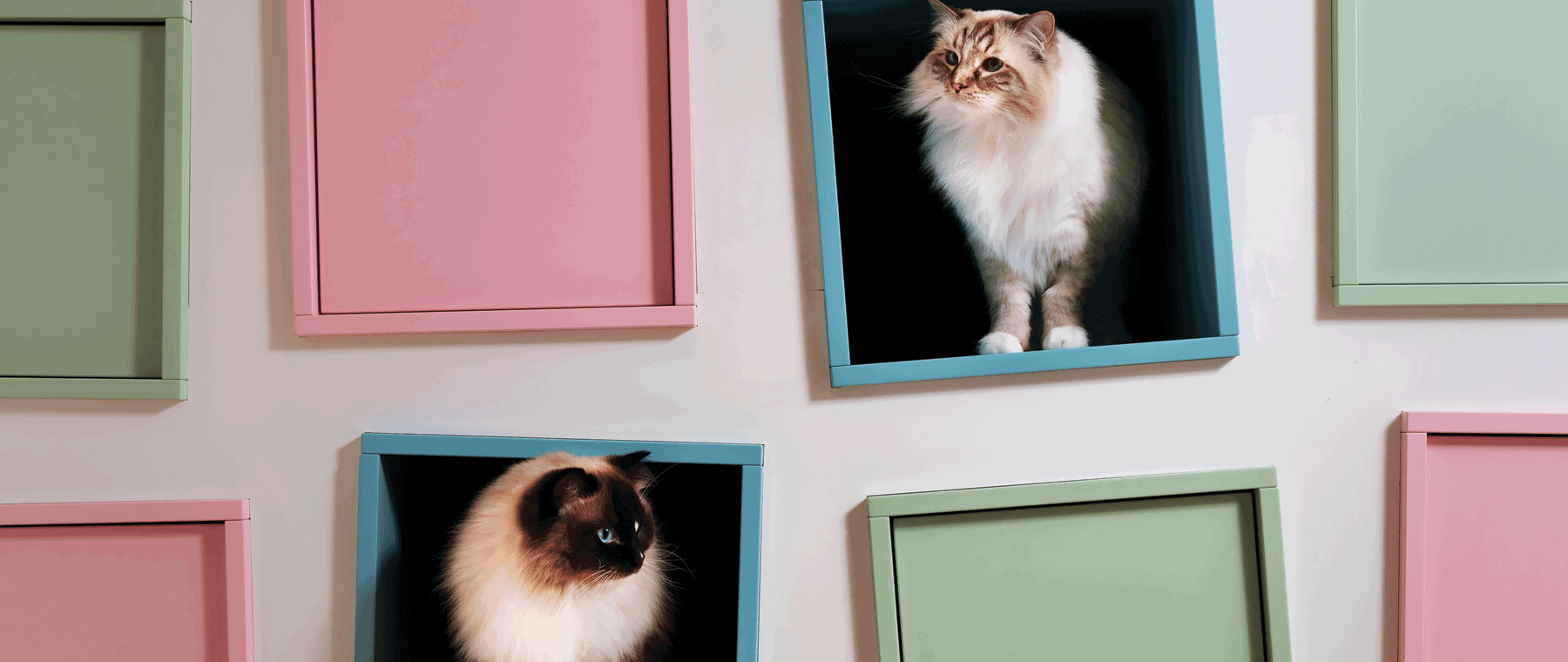 """These custom """"cat-binets"""" have hidden play spaces for feline friends"""