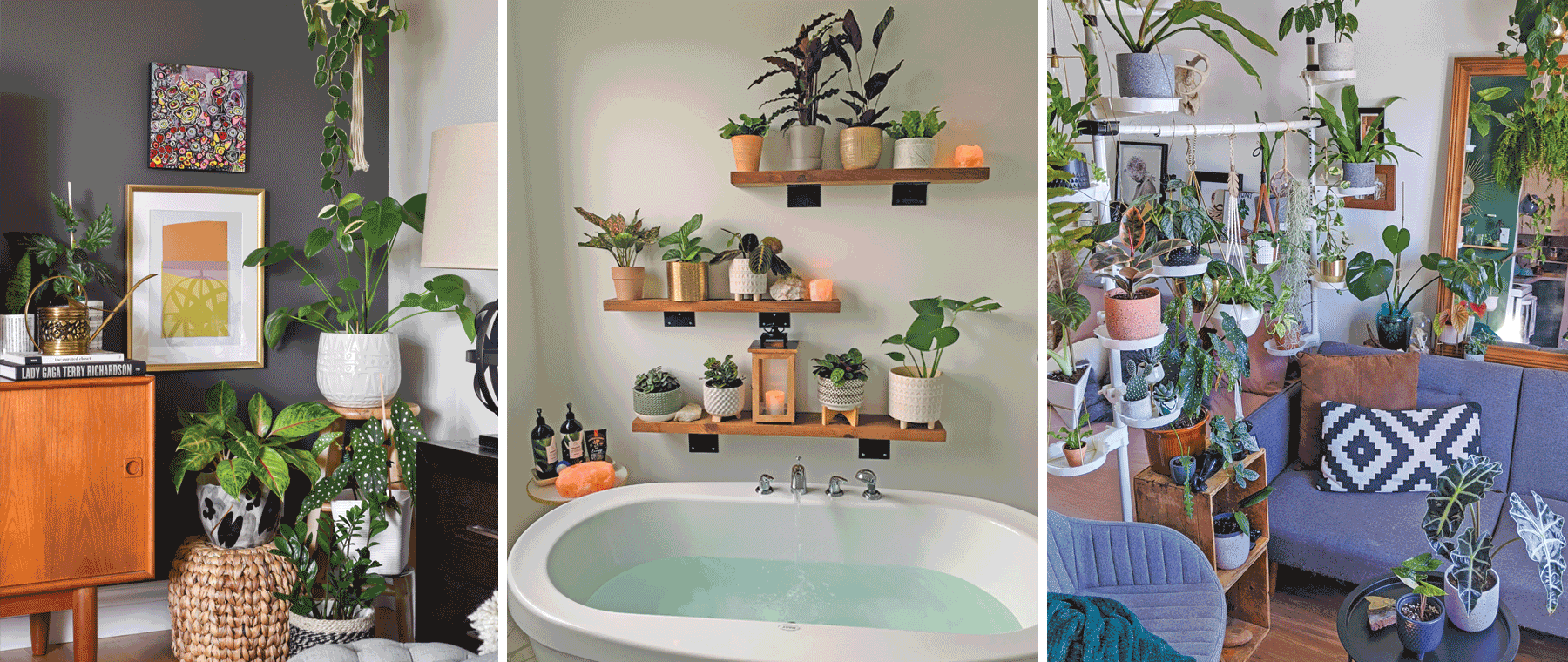 House Planted — how the pandemic sparked a house plant boom